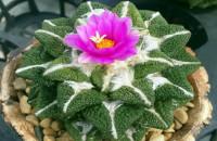 Как правильно поливать кактус в домашних условиях