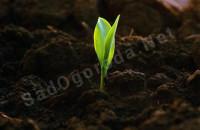 Как сделать почву плодородной и рыхлой