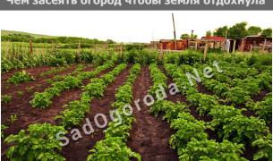 Чем засеять огород чтобы земля отдохнула