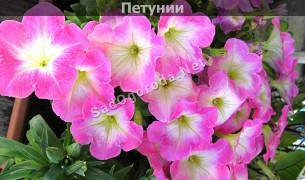 Цветы на рассаду в феврале марте