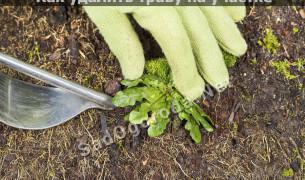Как удалить траву на участке