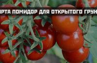 Cорта помидор для открытого грунта