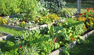 Совместимость растений в саду и огороде