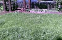 Какие семена для газона лучше выбрать