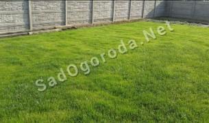 Трава для посева газона. Посев газон травы