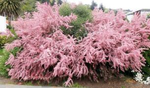 Цветы для сада и огорода многолетники