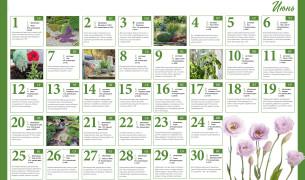 Лунный посевной календарь на июнь 2019 года, фазы луны, благоприятные дни