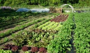 Севооборот на огороде, что после чего можно сажать