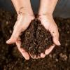Что лучше торф или чернозем для огорода