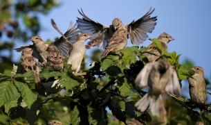 Как отпугивать птиц с огорода. Борьба с птицами.