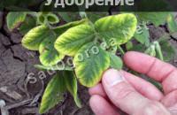 Удобрение для рассады в домашних условиях