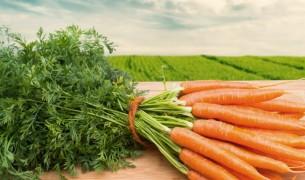 Сок моркови лечебные свойства и противопоказания