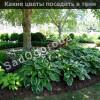 Что посадить в огороде в тени