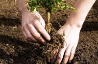 Посадка деревьев и кустарников: весной осенью, сроки, календарь