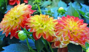 Осенний сад: красота, неподвластная смене сезонов