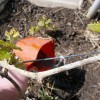 Чем подкормить виноград весной для хорошего урожая