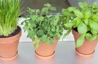 Как вырастить зелень на подоконнике круглый год