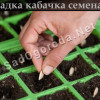 Посадка кабачков семенами