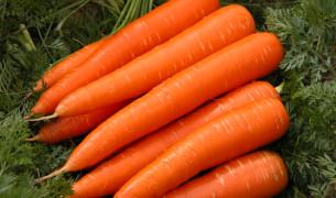 Как вырастить крупную морковь на огороде