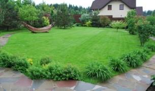 Как посадить газон на даче своими руками