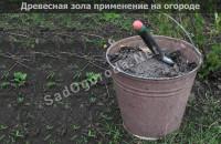 Древесная зола применение на огороде