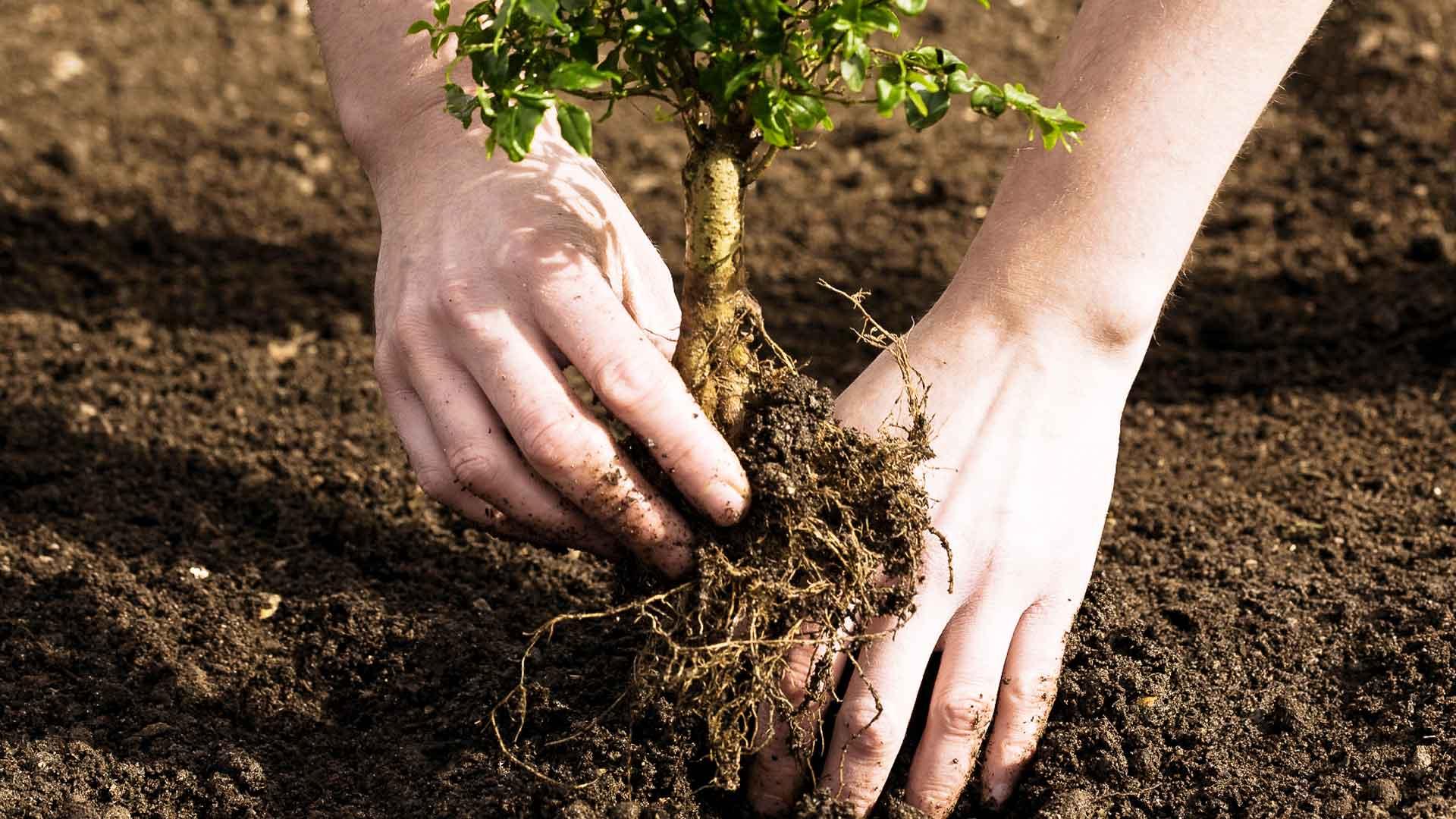 Картинки о посадке деревьев