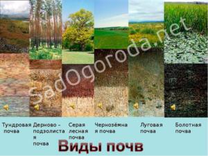 Виды почвы и способы ее улучшения.