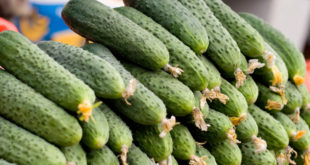 dreamstime_l_9954979-2-cucumber-fruits-1
