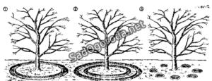 Oroshenie-yablon-e1449415651735