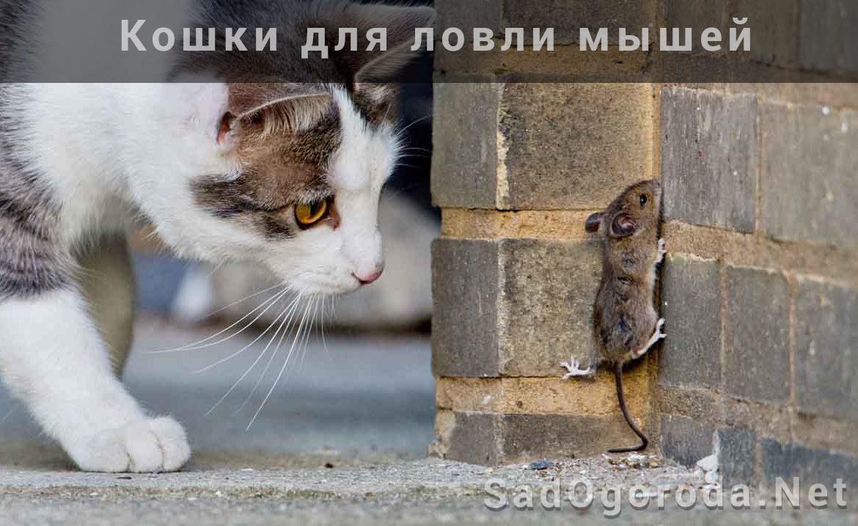 Как бороться с мышами на даче. Мыши на участке. Как эффективно бороться с мышами