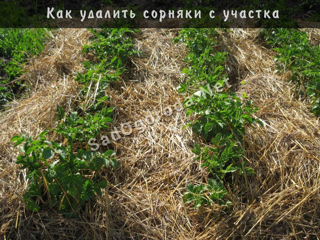 Как удалить сорняки с участка. Способы борьбы с сорняками на участке
