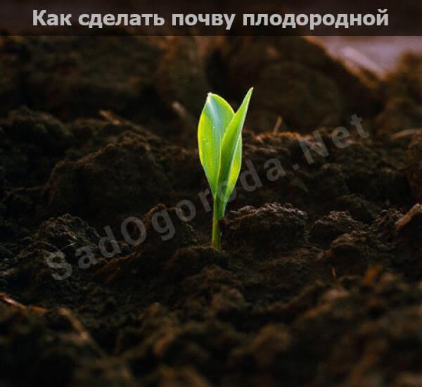 Как сделать почву плодородной и рыхлой без химии