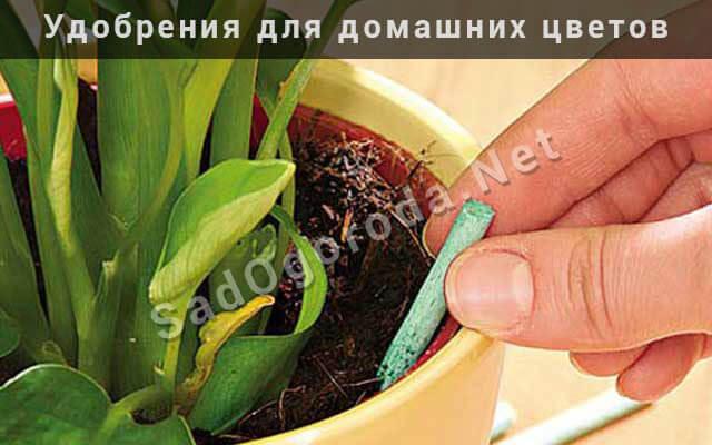 Удобрения для домашних цветов своими руками