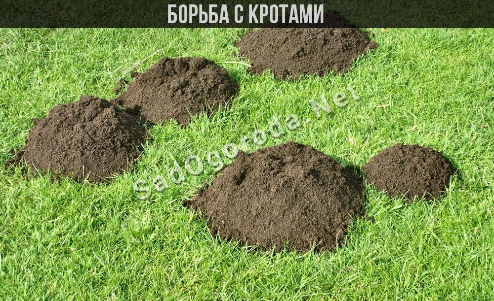 Борьба с кротами на садовом участке народными средствами