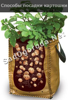 Способы посадки картошки чтобы получить хороший урожай