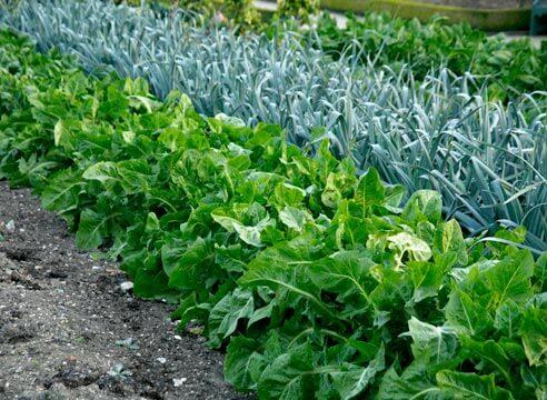 Как удалить траву на участке: народными средствами, с помощью уксуса
