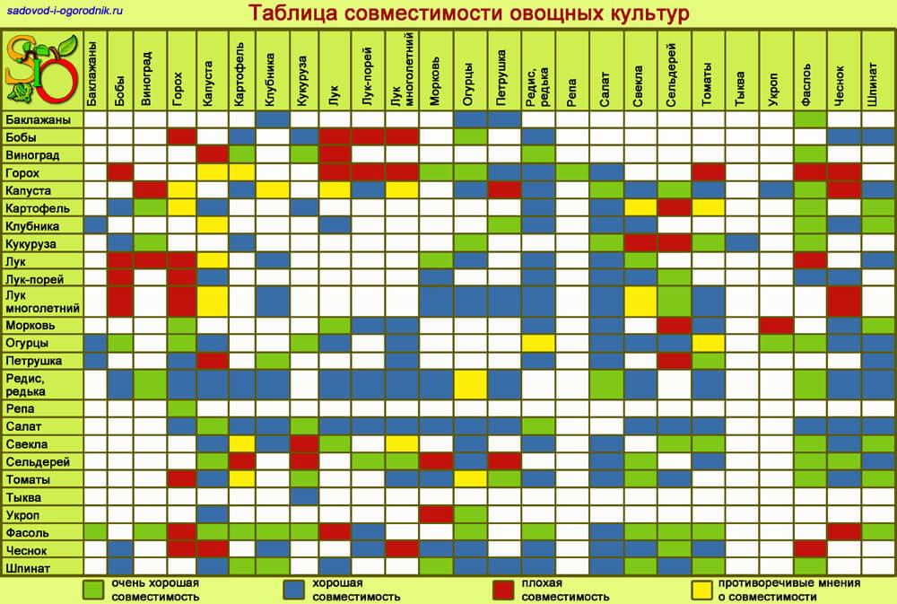 Совместимость растений в саду и огороде: таблица