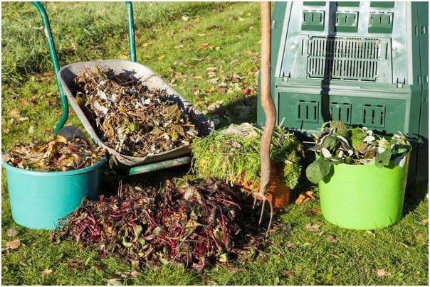 Чем засеять огород чтобы земля отдохнула: после картофеля, весной, осенью