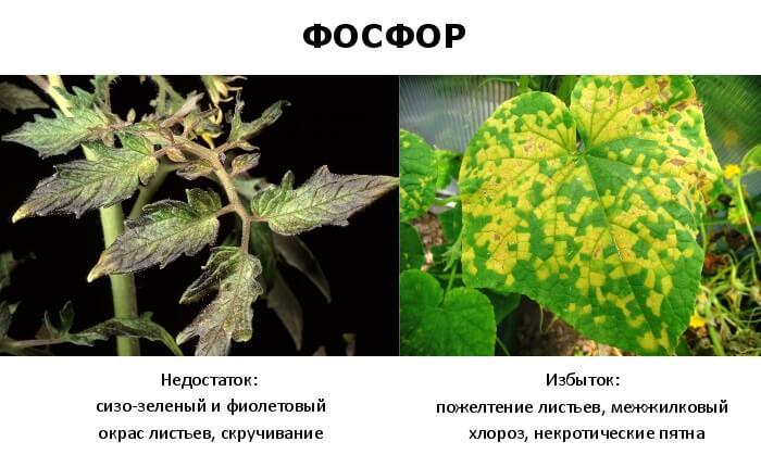 Суперфосфат удобрение применение на огороде: весной, отзывы, для помидор
