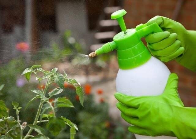 Мочевина удобрение применение на огороде:весной, для помидор, отзывы