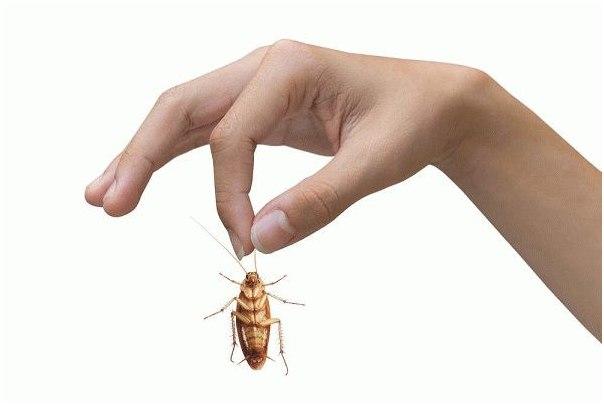 Как избавиться от тараканов в доме самый эффективный способ, отзывыs