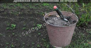 Древесная зола применение на огороде: для огурцов, для томатов, видео