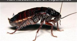 Как избавиться от тараканов в доме самый эффективный способ, отзывы