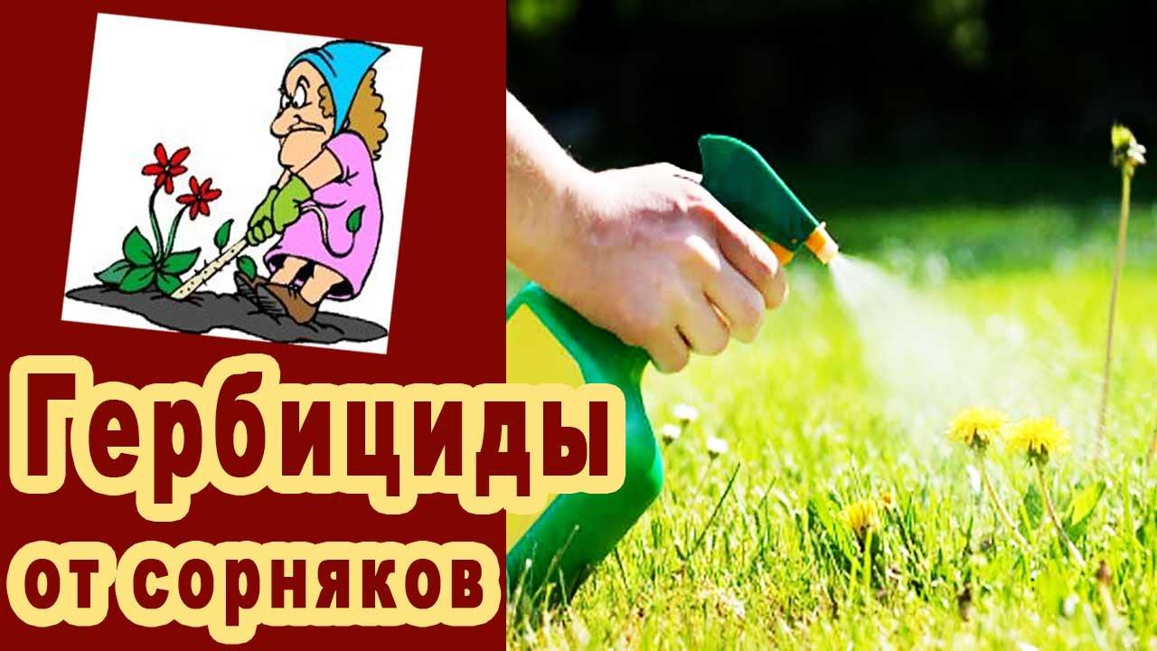 Как вывести пырей с огорода: навсегда, народными средствами, видео