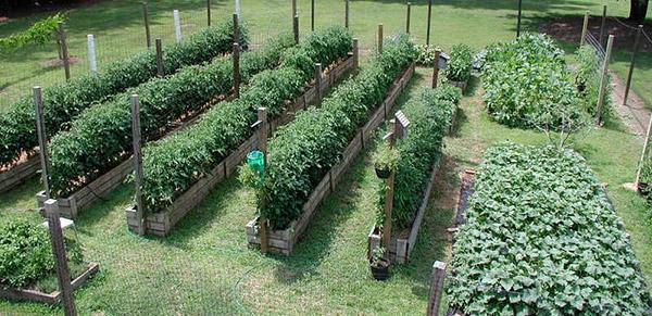 Как правильно делать грядки на огороде: из земли, без ограждения, фото