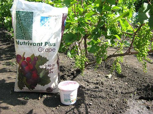 Как правильно вносить удобрения в виноград