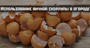 Использование яичной скорлупы в огороде