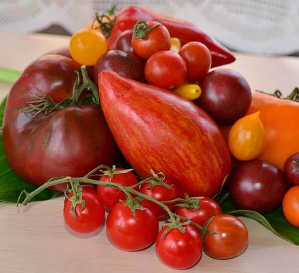 Проращивание семян томатов перед посадкой как правильно и нужно ли