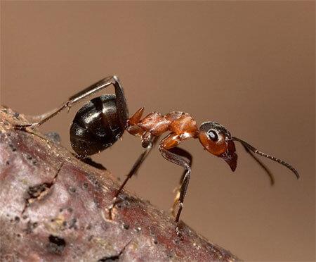 Какое средство от муравьев самое эффективное