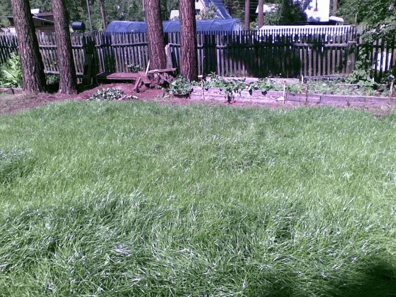 фото спортивного газона из овсяницы красной волос нормальной жесткости